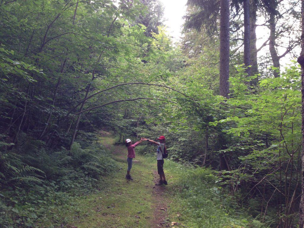 arche en arbres romme