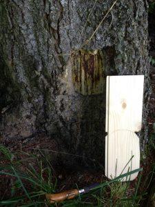 trou dans arbre et plinthe pour porte à lutins