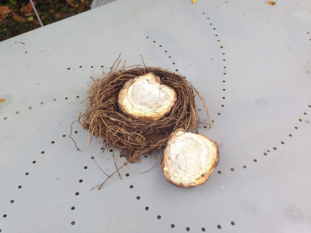 nid-de-cailloux